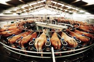 Flickr-factory-farm-Ardarve